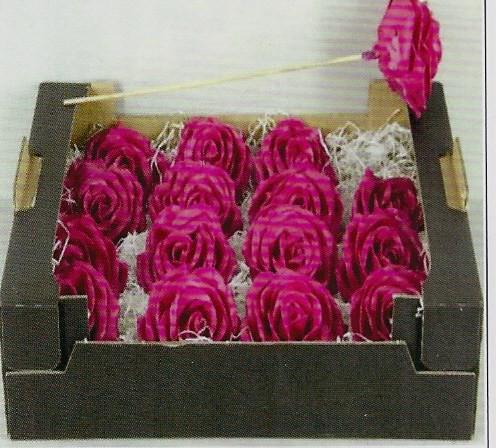 Wachsrosen pink